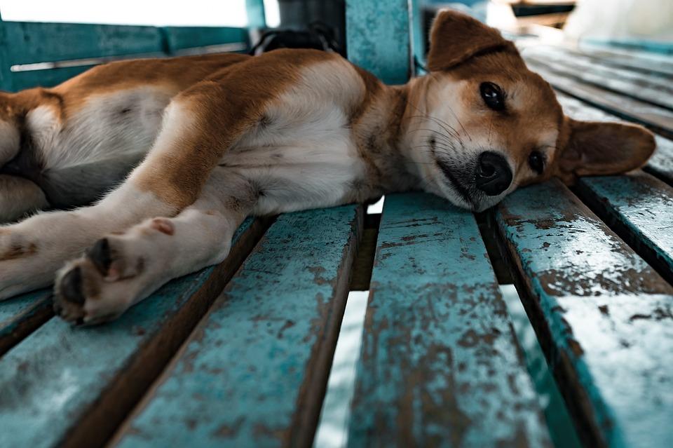 Helping Hot Dogs Avoid Heatstroke