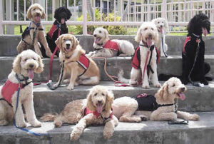 group of service dogs