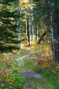Itasca park trail